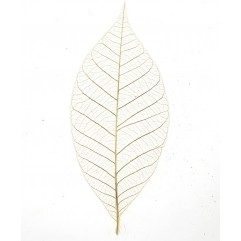 20 feuilles squelettes écrues