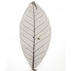 20 feuilles squelettes marron