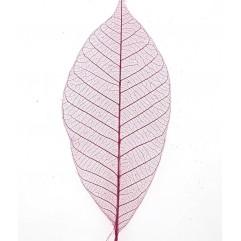 20 feuilles squelettes fuchsia
