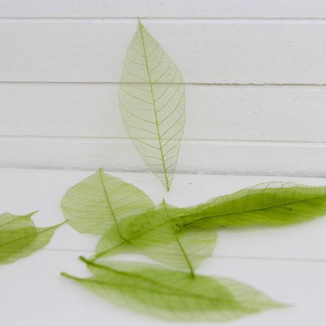 20 feuilles squelettes vertes