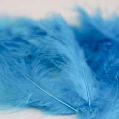 50 plumes turquoise