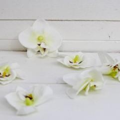 10 orchidées blanches et roses